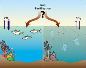 Iron Fertilization
