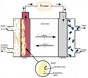 bacteria electricity