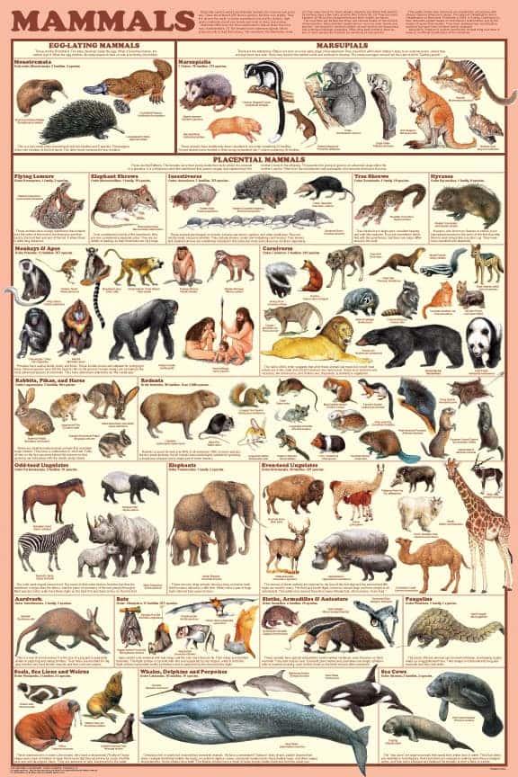 a151-mammals_poster