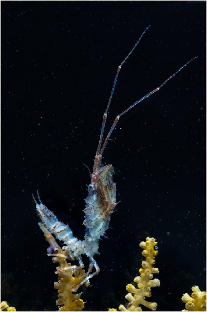 005_isopod_crustacean
