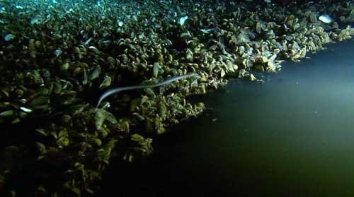underwater-lake-1