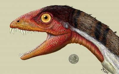 Artist impression ofthe  Daemonosaurus chauliodus shows its size relative to an American quarter. (c) Jeffrey Martz