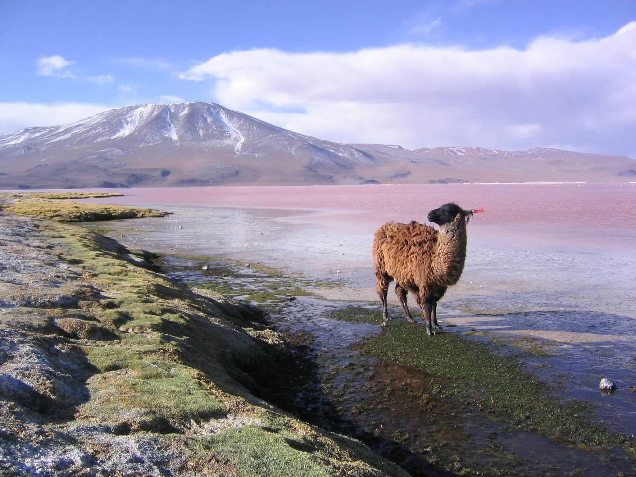 Nature To Get Legal Rights In Bolivia