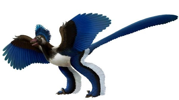 Artist's impression of the birdlike dinosaur known as Xiaotingia zhengi. (c) Xing Lida and Liu Yi