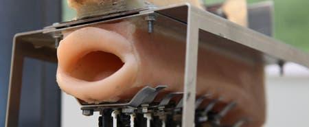 Bionic Mouth