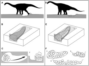 Diagram showing titanosaur nest excavation and egg laying