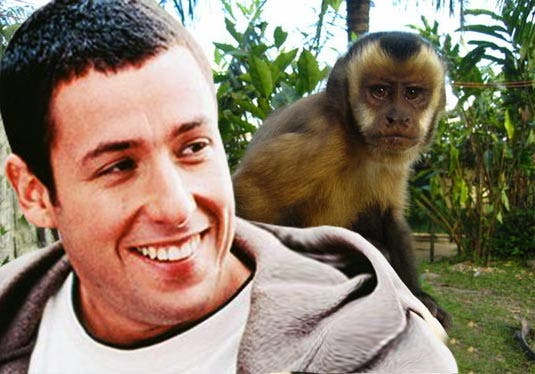 I bought an Adam Sandler for 7 monkey dollars.