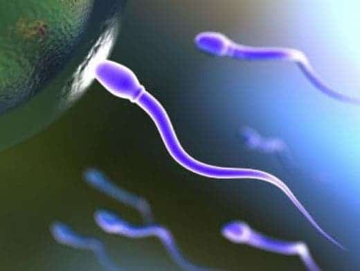sperm donors