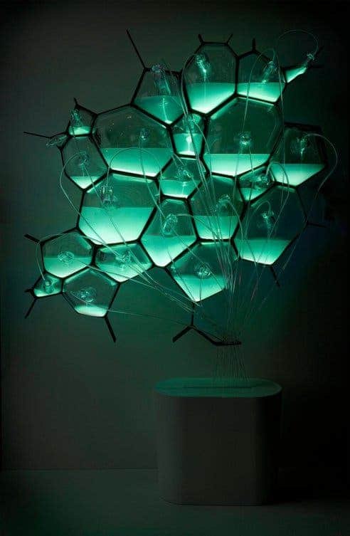 bacteria bio-design light