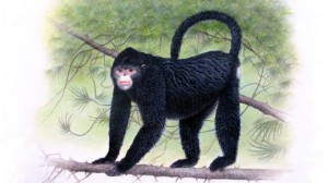 "Artist impression of the white snub-nosed monkey, Rhinopithecus strykeri, which sports an ""Elvis"" hairdo. (c) AP Photo/Fauna & Flora International, Martin Aveling"