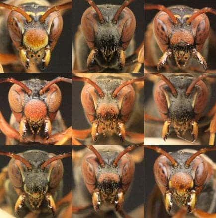 paper wasps faces