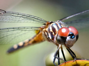 The dragonfly is capable of flying and hovering very precisely, even in conditions of instability like very strong winds.