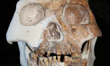 A skull from a specimen, recovered from Longlin cave in China, belonging to the Red Deer Cave people - possibly a new species of human. (c) Darren Curnoe