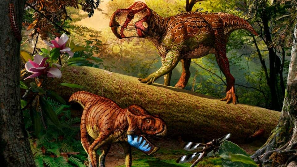 Gryphoceratops morrisoni (down) and Unescoceratops koppelhusae (up). Though illustrated together here, it was highly unlikely the two ever met. Illustration by Julius T. Csotonyi.