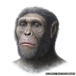 Australopithecus Sediba illustration