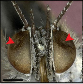 fukushima-butterfly-radiation