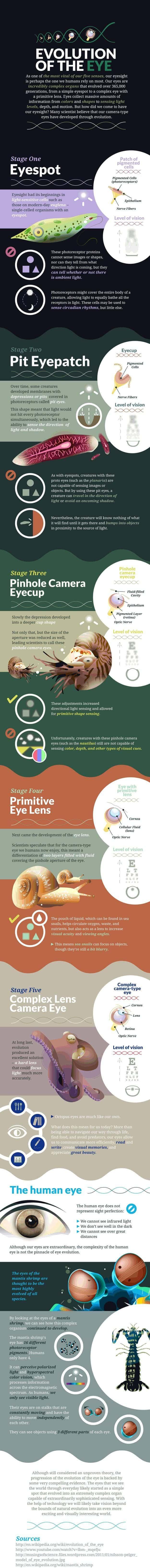 Eye Infographic