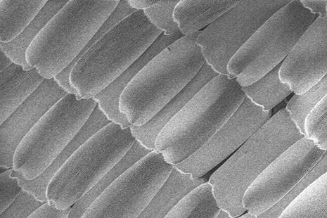 Electron microscope image reveals the texture on the micrometer scale.