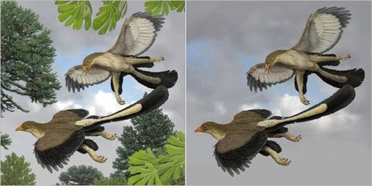 Artist impression of Archaeopteryx lithographica by Carl Buell