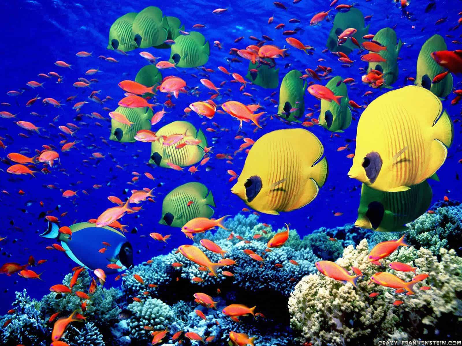 new study estimates 1 million marine species   one third
