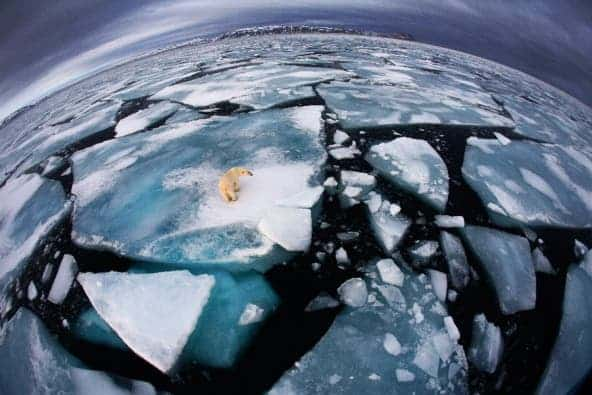 Credit: Anna Henly, Winner, The world is in our hands award/wildlife photographer of the year 2012/BBC Worldwide Museum