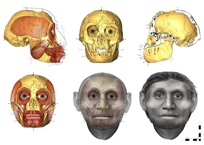 Forensic facial approximation methods helped give an idea of how the muscle and fat intersected with the hobbit's skull . (c) University of Wollongong