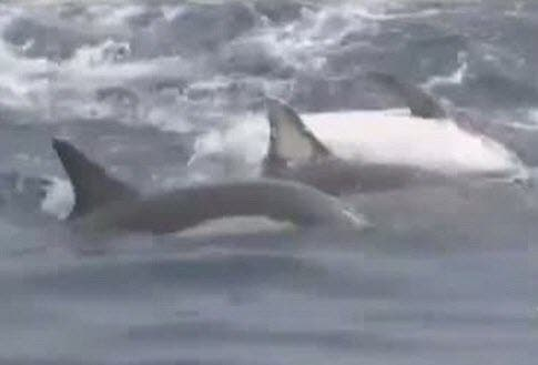 dolphin save