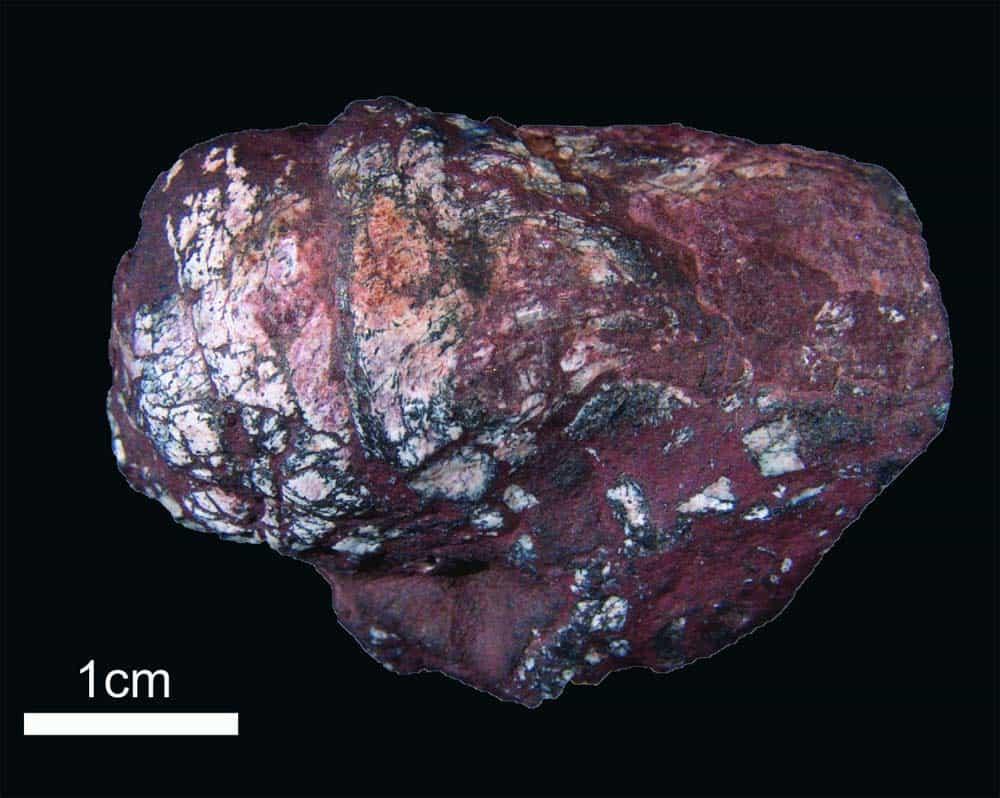 fossil coprolite