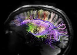 brains map