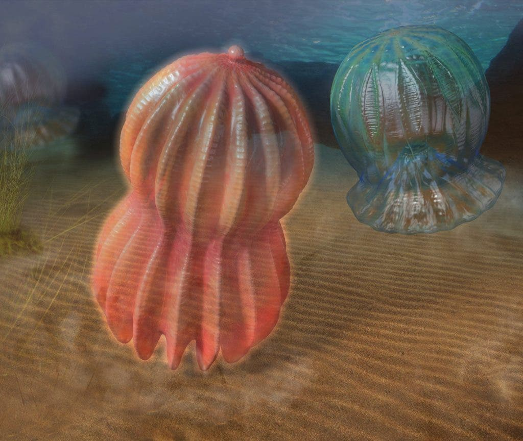 A Book On The Cambrian With Some Mind Blowing Illustrations