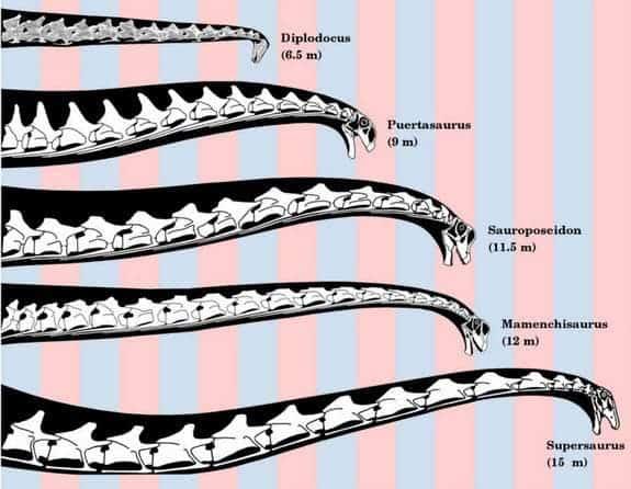 sauropod2