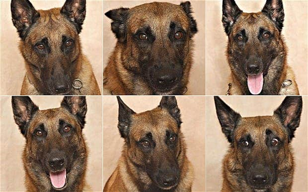 Mal's various emotional stances. (c) Walden University