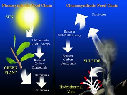 Chemosynthetic Ecosystems
