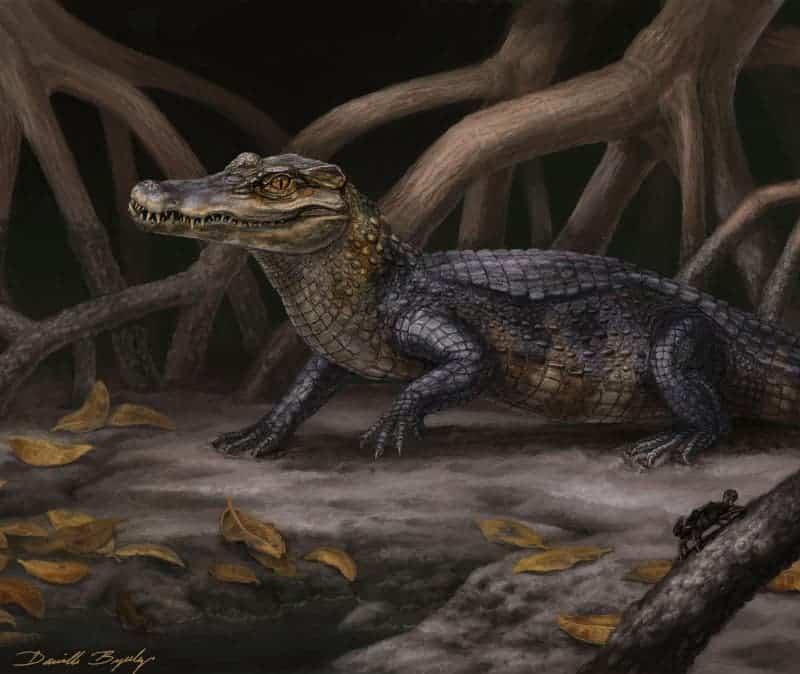 Fossils Of Crocodilian Hippo Like Species Found In Panama