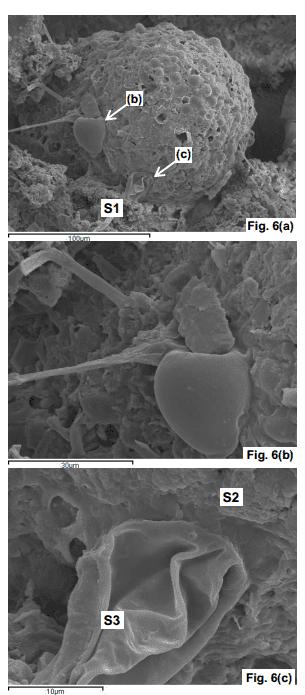 diatoms1