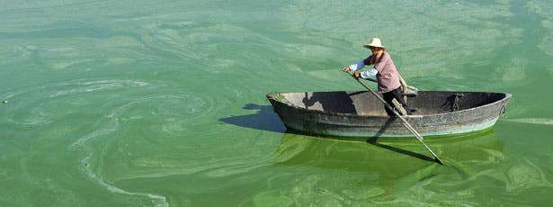 A worker rows a boat in Chaohu Lake, filled with algae, in Hefei