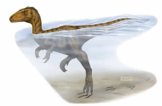 A University of Alberta researcher has identified some of the strongest evidence ever found that dinosaurs could paddle long distances.  (c) Nathan Rogers