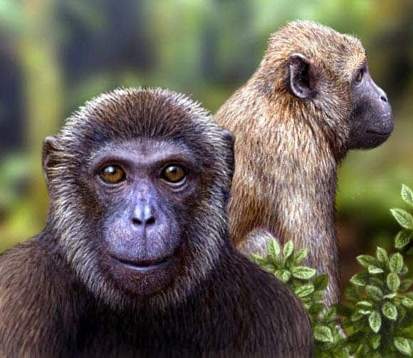 Artist's impression of the newly discovered Rukwapithecus, front, and Nsungwepithecus, right (Mauricio Anton).