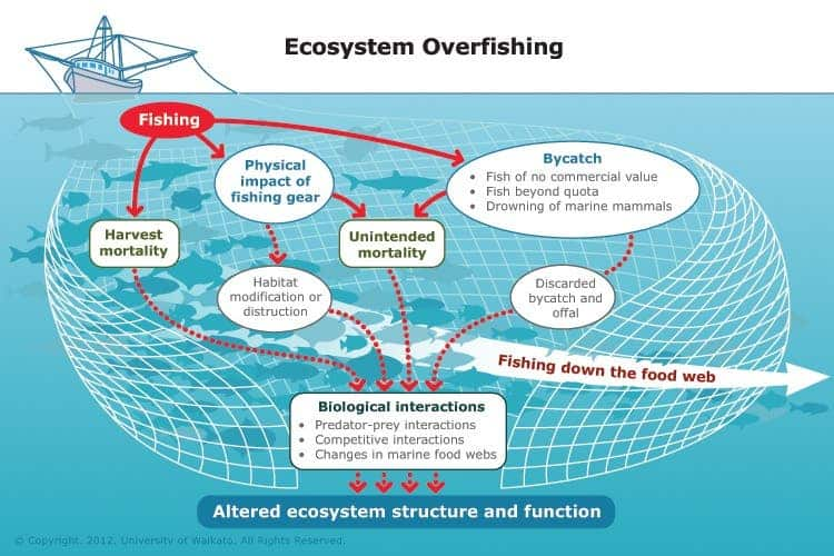 how does the over fishing of There are not many benefits to overfishing, and of the benefits discovered by overfishing very few are environmentally friendly the main benefit of overfishing is that local economies are boosted a lot because fisherman have a surplus of fish, so the prices for fish are really low.
