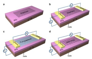 Fabrication process of the device. (a) A monolayer graphene was mechanically exfoliated onto a 285nm SiO2/Si substrate. (b) The graphene photodetector was processed into a FET structure. Two electrodes (that is, the source and the drain terminals) of Ti/Au (20 nm/80 nm) were fabricated on the graphene by photolithography and lift-off processes. The gate terminal was fabricated on the bottom of the Si substrate. (c) A thin nm-scale Ti sacrificial layer was deposited onto the graphene by electron-beam evaporation. (d) The Ti sacrificial layer was removed via wet etching, and then GQD array structure with various quantum dot (QD) sizes can be formed on the Si substrate depending on the thickness of the Ti layer. (Credit: Y. Z. Zhang et al./Nature Communications)