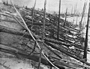 Severed trees in the wake of the Tunguska alleged meteor impact. Photo circa 1908. (c) UNIVERSAL HISTORY ARCHIVE/GETTY IMAGES