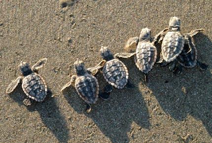 turtle murder 2