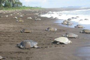 turtle murder 3