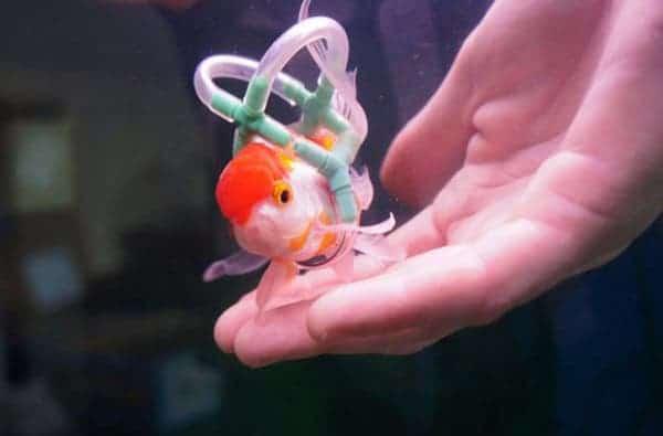 fish-lifejacket-1