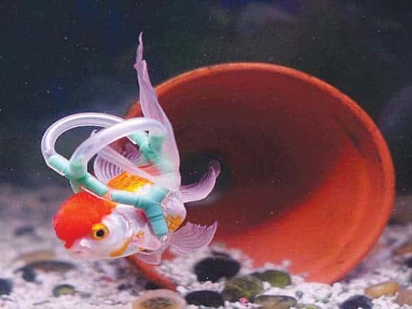 fish-lifejacket-2
