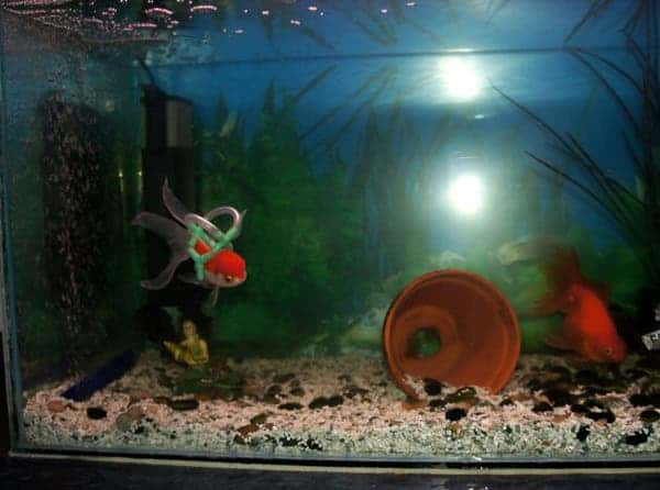 fish-lifejacket-3