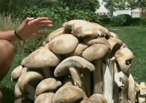 giant-fungus-2