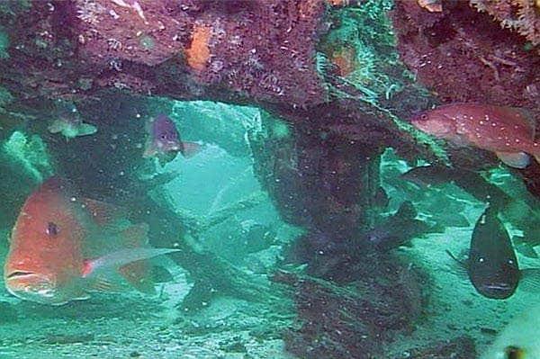 underwater forest21