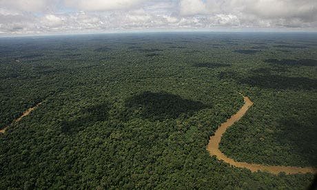 An aerial view of the Yasuni National Park, in Ecuador's northeastern jungle. Photograph: Dolores Ochoa/AP