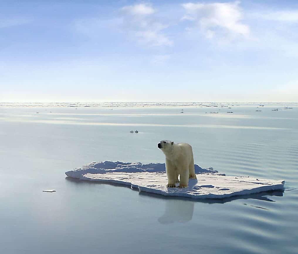 Global scientists shocked by true scale of ocean warming sciox Gallery
